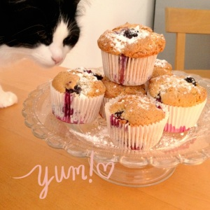 cat and muffin